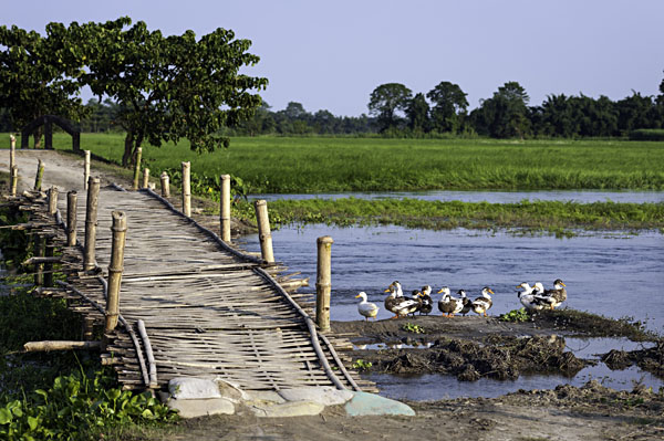 Majuli Island in Assam, India