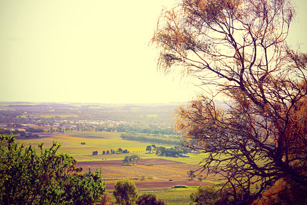 Nuriootpa region of the Barossa Valley, Australia