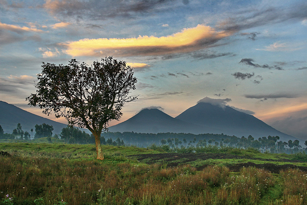 Parc de Volcans or Volcanoes National Park, Rwanda