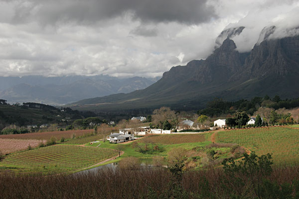 Stellenboch Winery, South Africa