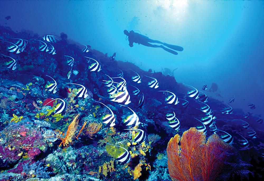Underwater World, Fiji