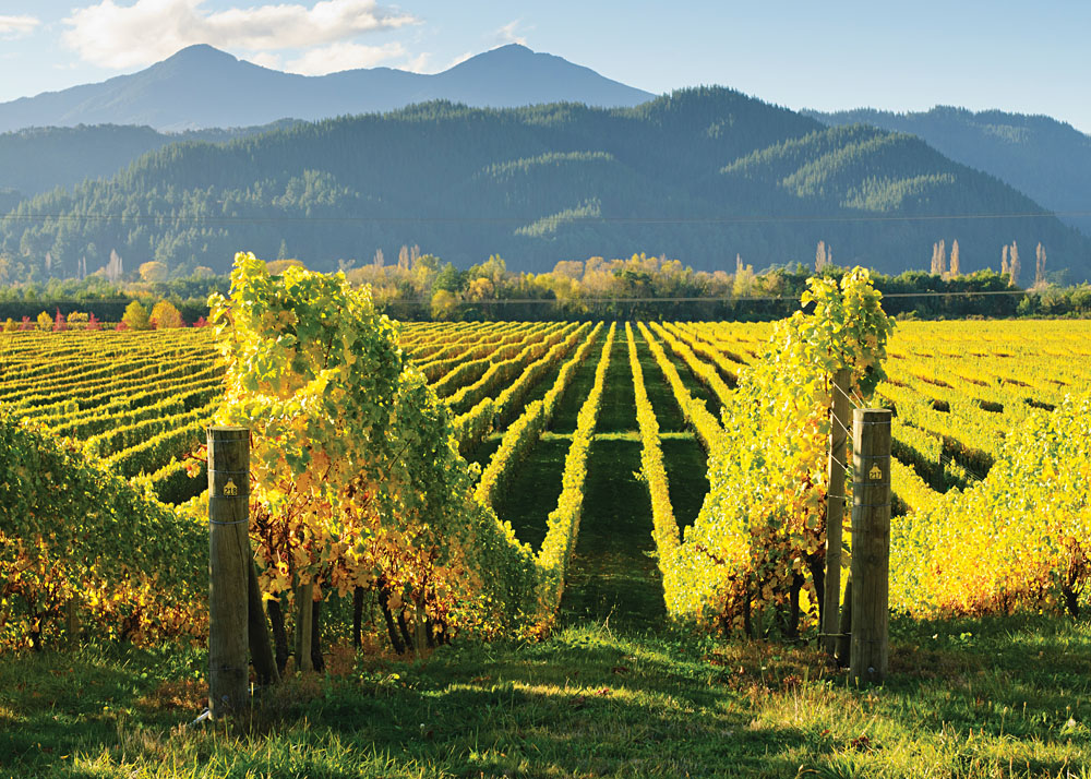 Vineyards in the Marlborough District South Island, New Zealand