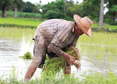 Rice farmer in Isaan, Thailand
