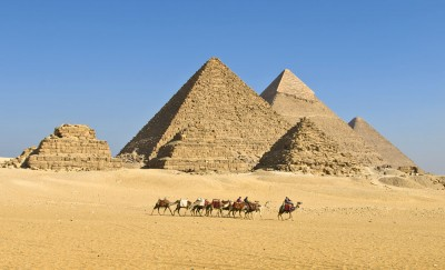 Camels Walking in Front of Pyramids, Egypt