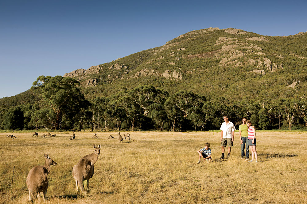 Get Up Close and Personal with Wildlife in the the Grampians, Australia