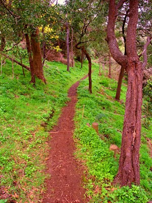 Narrow Hiking Trail through the dense plant growth at Tower Hill State Game Reserve in Victoria, Australia