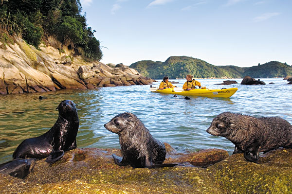 Tonga Island Kayakers and Seals, Abel Tasman, New Zealand