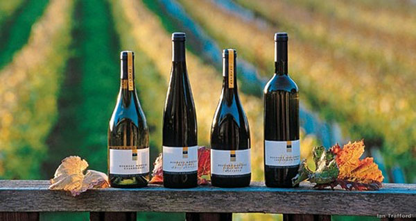Wine Bottles in Nelson, New Zealand