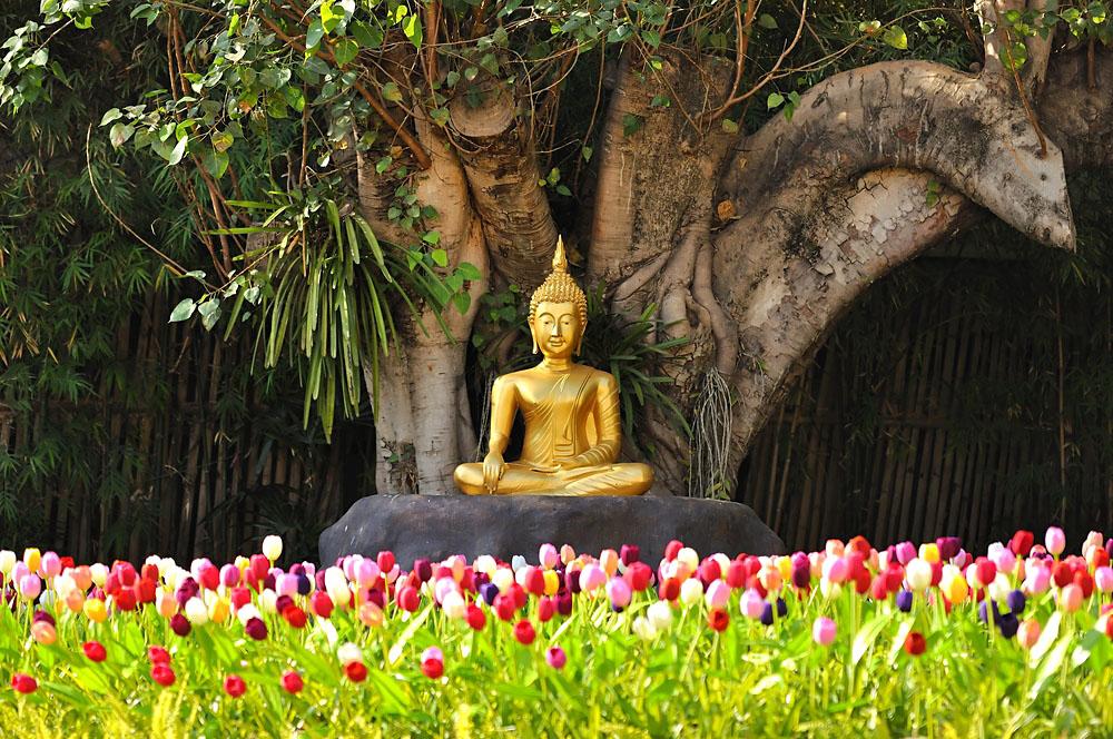 Meditation Buddha Statue Under a Bodhi Tree, Chiang Mai, Thailand