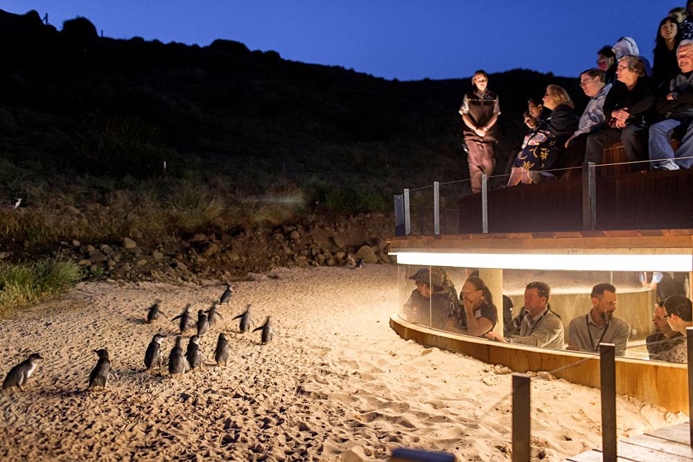 Phillip Island Penguin Parade Underground Viewing Exterior, Victoria, Australia