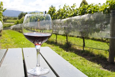 Glass of Red Wine at Vineyard, Marlborough District, Hawkes Bay Region, North Island, New Zealand