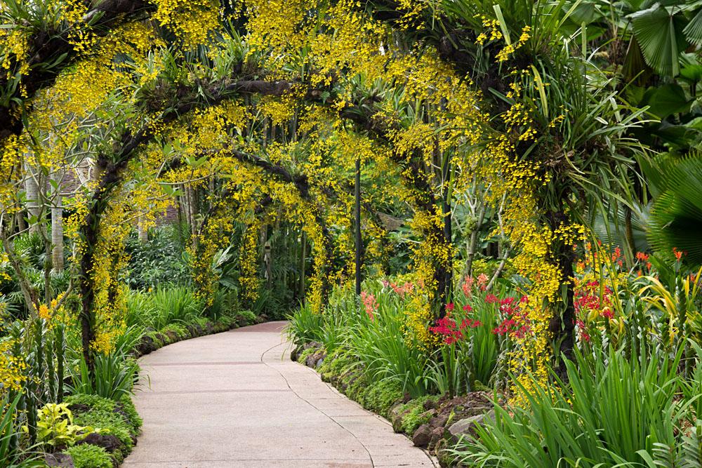 Orchid Garden, Singapore Botanic Garden, Singapore