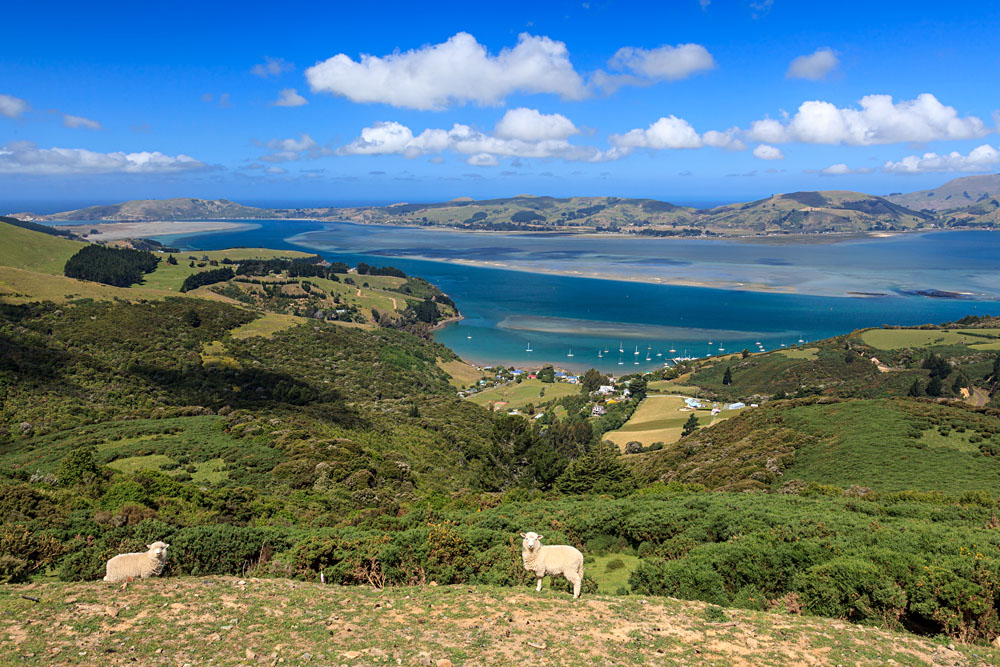 Otago Peninsula, Dunedin, New Zealand