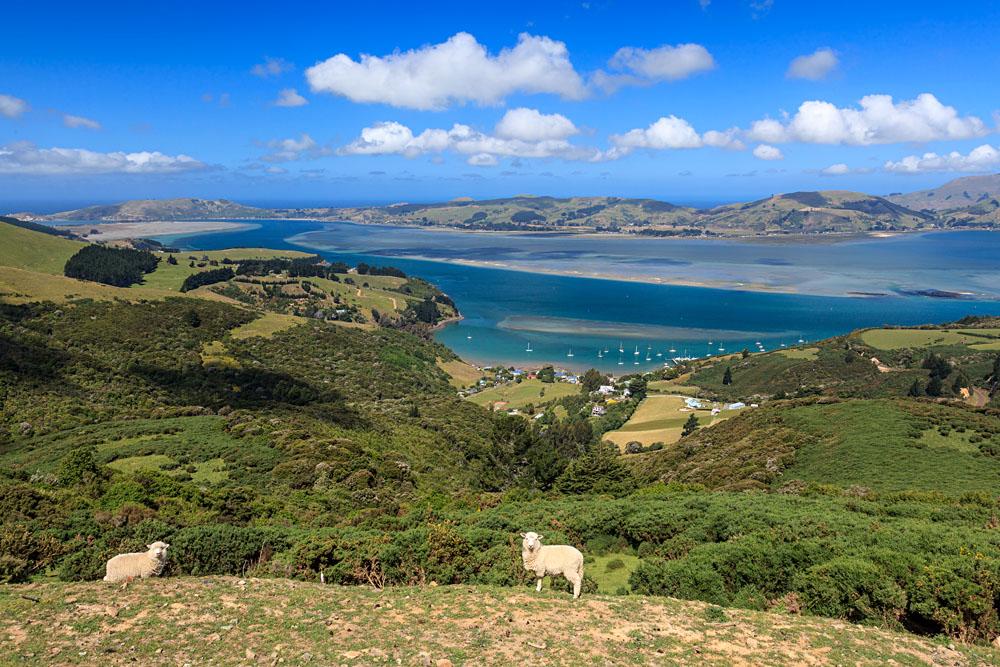 Otago Peninsula, Dunedin, New Zealand