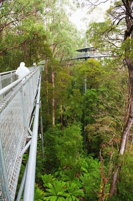 Otway Fly Steel Walkway in the Rainforest, Great Ocean Road, Australia