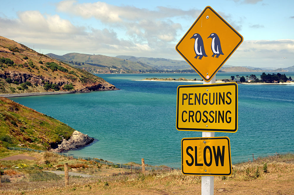 Penguin Crossing Road Sign, Otago Peninsula, New Zealand