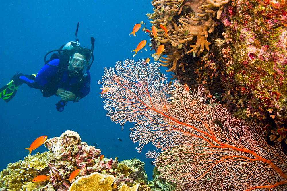 Scuba Diver Viewing Sea Life in Great Barrier Reef, Queensland, Australia