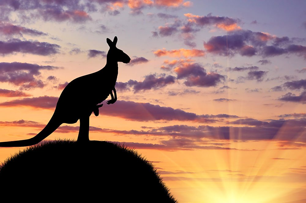 Silhouette of a Kangaroo with a Baby on a Hill Against a Beautiful Sunset, Australia