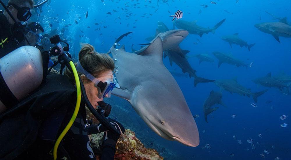 The Ultimate Shark Dive adventure in Beqa, Fiji
