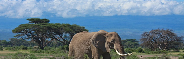 Amboseli Elephant with Views of Mt Kilimanjaro, Kenya