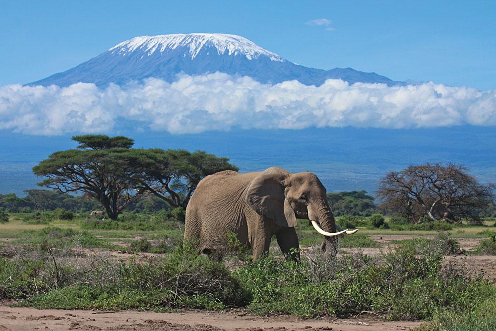 Amboseli Elephant with Views of Mt Kilimanjaro, Kenya