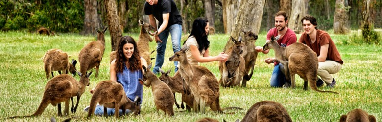 Cleland Wildlife Park, Adelaide Hills, South Australia, Australia