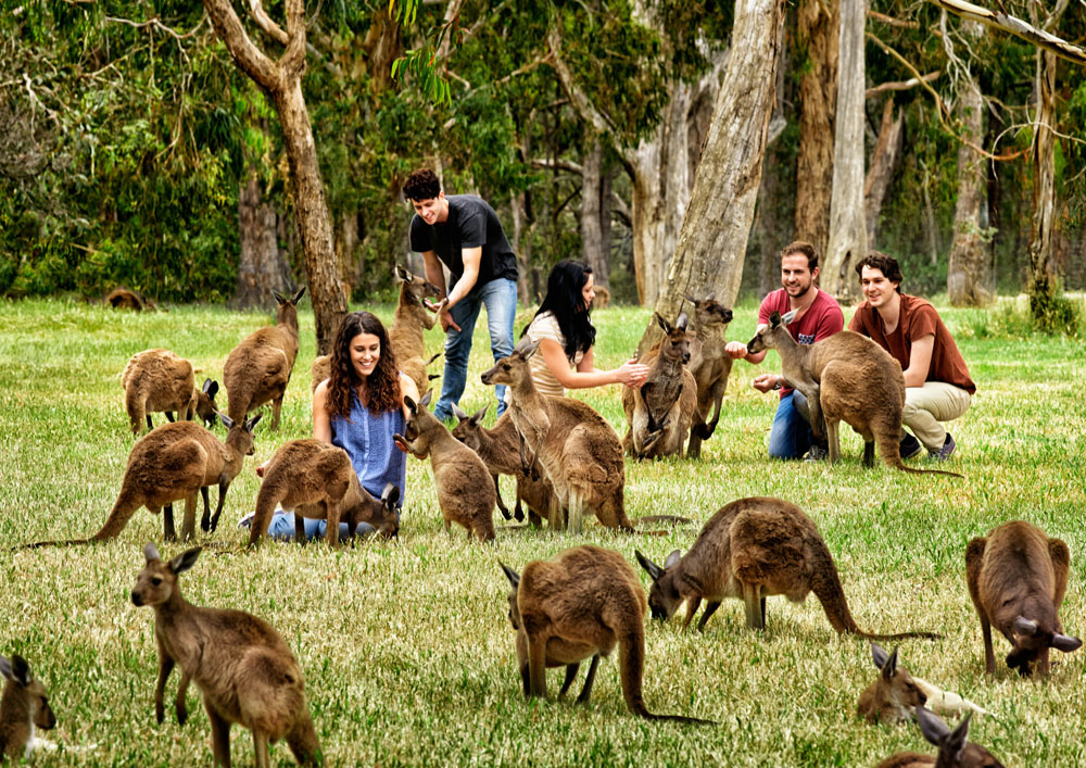 Discover The Wow Factor Of South Australia Goway