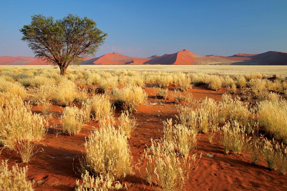 Desert Landscape and Grass, Sossusvlei Dunes, Namibia, Southern Africa
