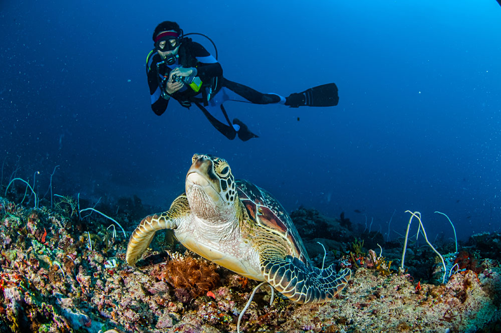 Diver and Green Turtle in Gili, Lombok, Nusa Tenggara Barat, Indonesia