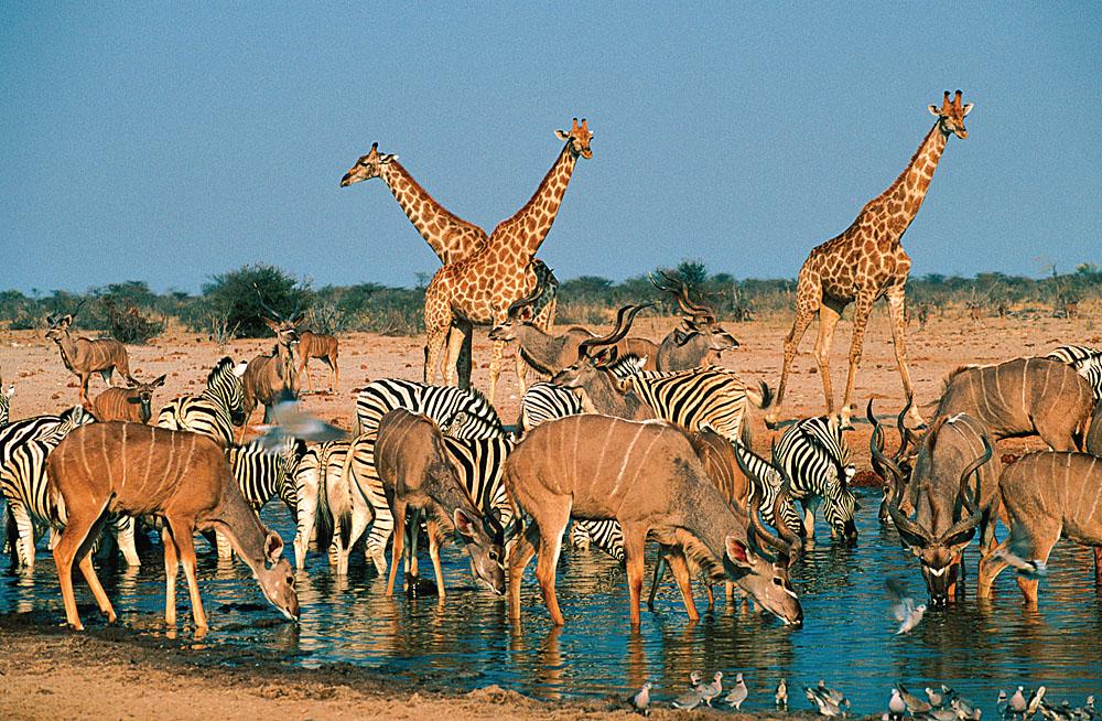 Etosha Waterhole, Namibia