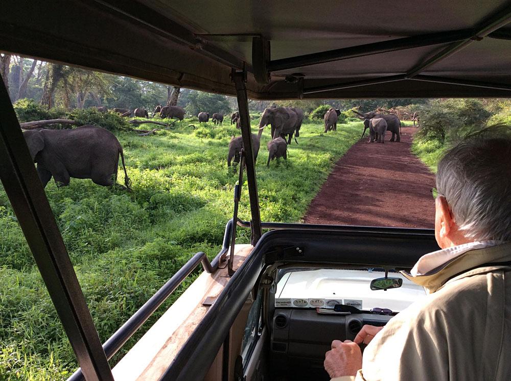 Game Viewing Elephants at Ngorongoro Conservation Area, Tanzania