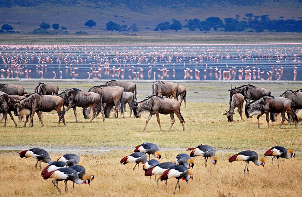 Lake Manyara Scene, Tanzania