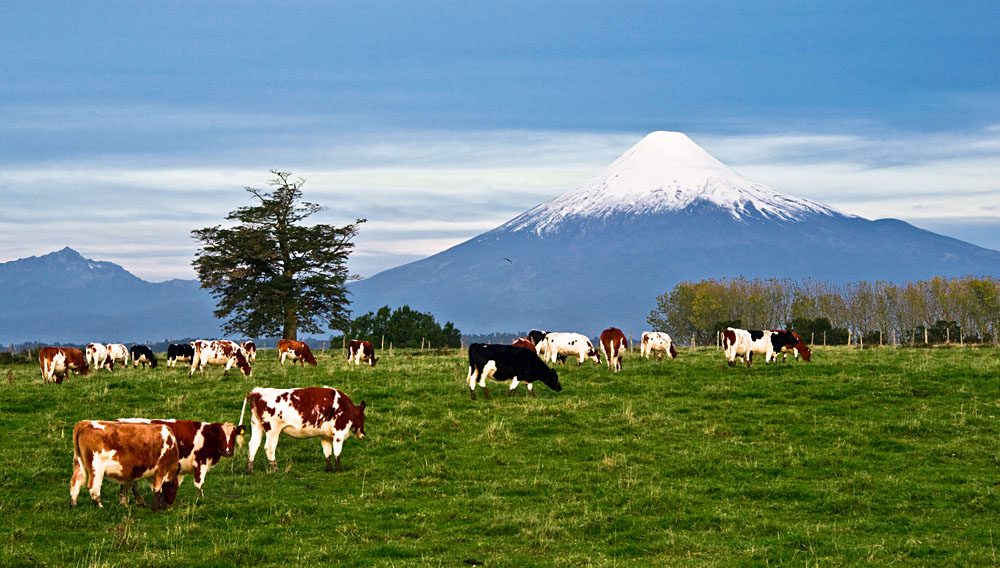 Landscape of Osorno Volcano, Lake District, Chile
