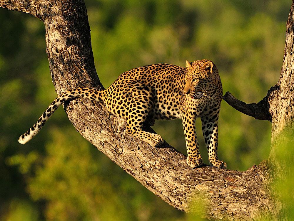 Ecotourism Destinations: East Africa | Goway