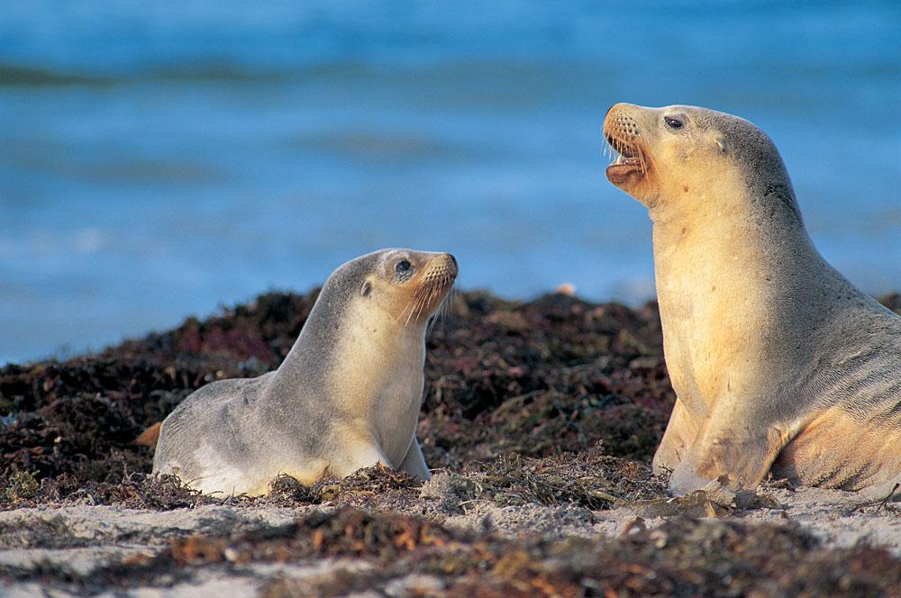 Seals in the Galapagos Islands, Ecuador