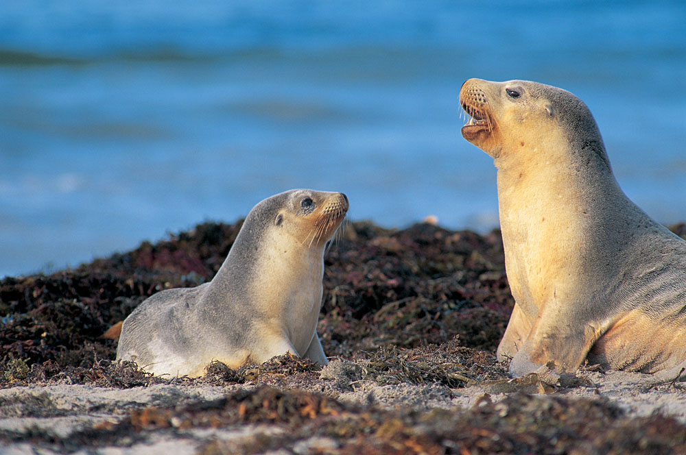 Seals in the Galapagos Islands, Ecuador