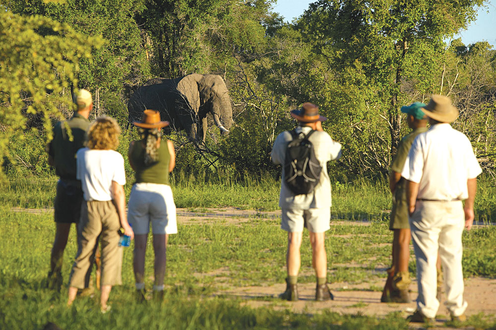 Walking Safari, Kruger National Park, South Africa