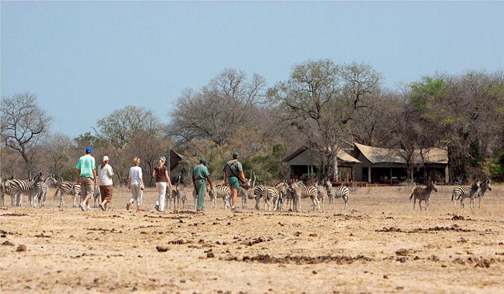 Walking at Plains Camp, Kruger National Park, South Africa