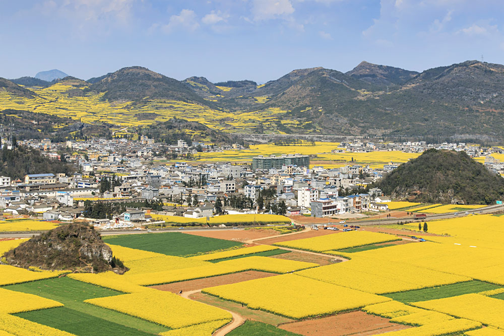 Rapeseed Flowers of Luoping in Yunnan, China