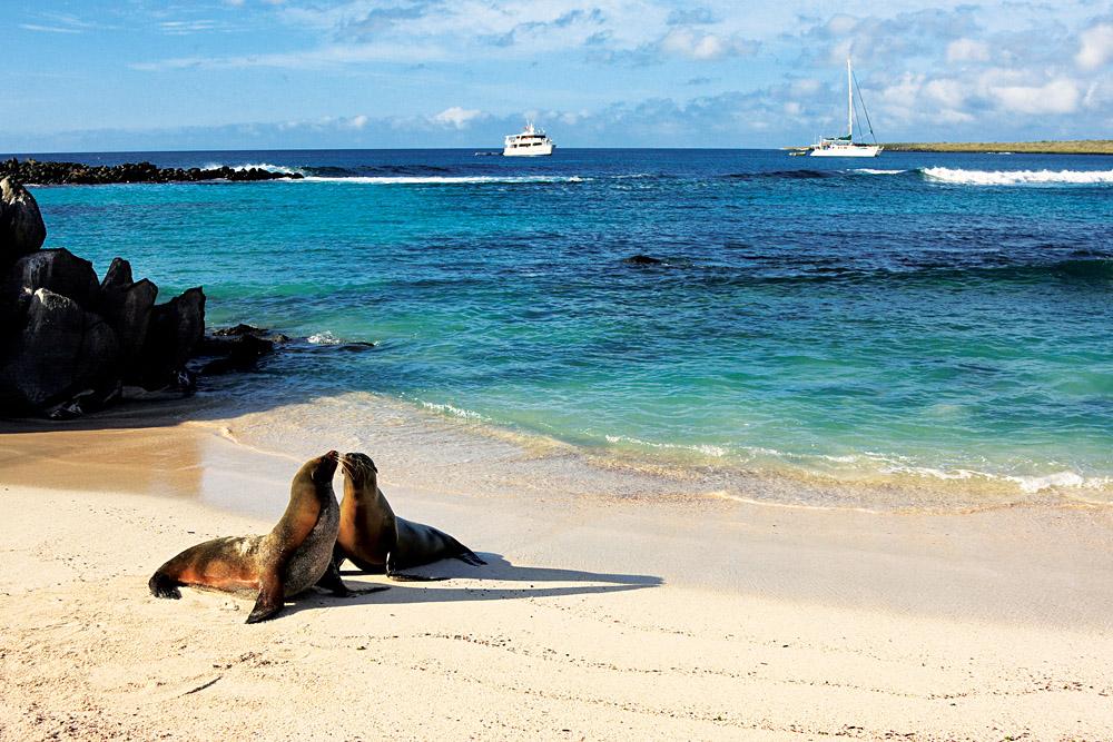 Seals in Galapagos Islands, Ecuador