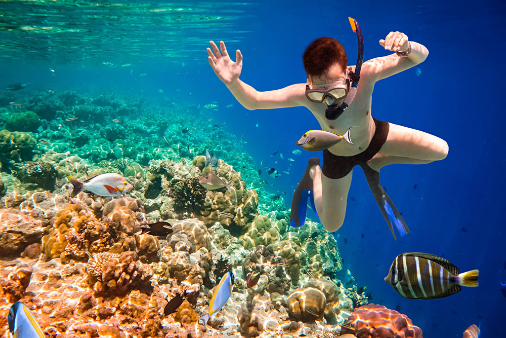 Snorkeler Diving Along the Brain Coral, Maldives