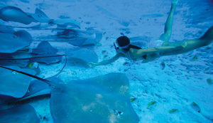 swim with Manta Ray