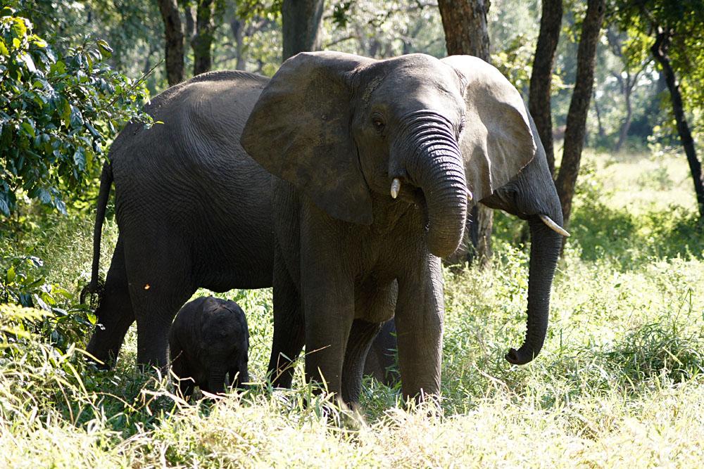Akke Bos - Elephants in Majete Wildlife Reserve, Malawi