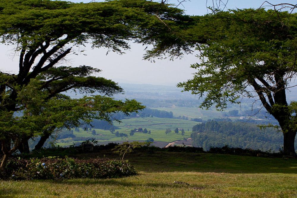 Akke Bos - Satemwa Tea Estate, Malawi