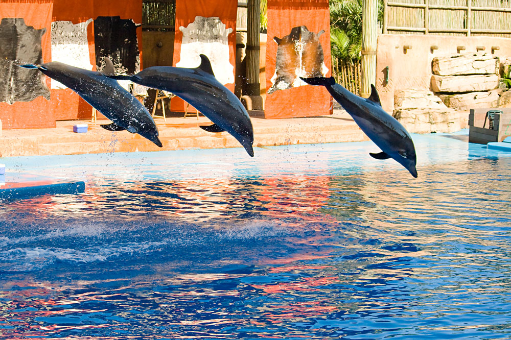 Dolphin Show at uShaka Marine World, Durban, South Africa
