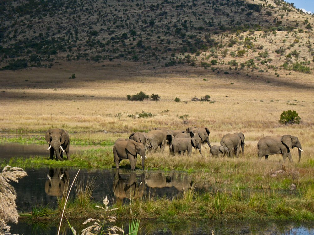 Elephants in Pilanesberg Game Reserve, South Africa