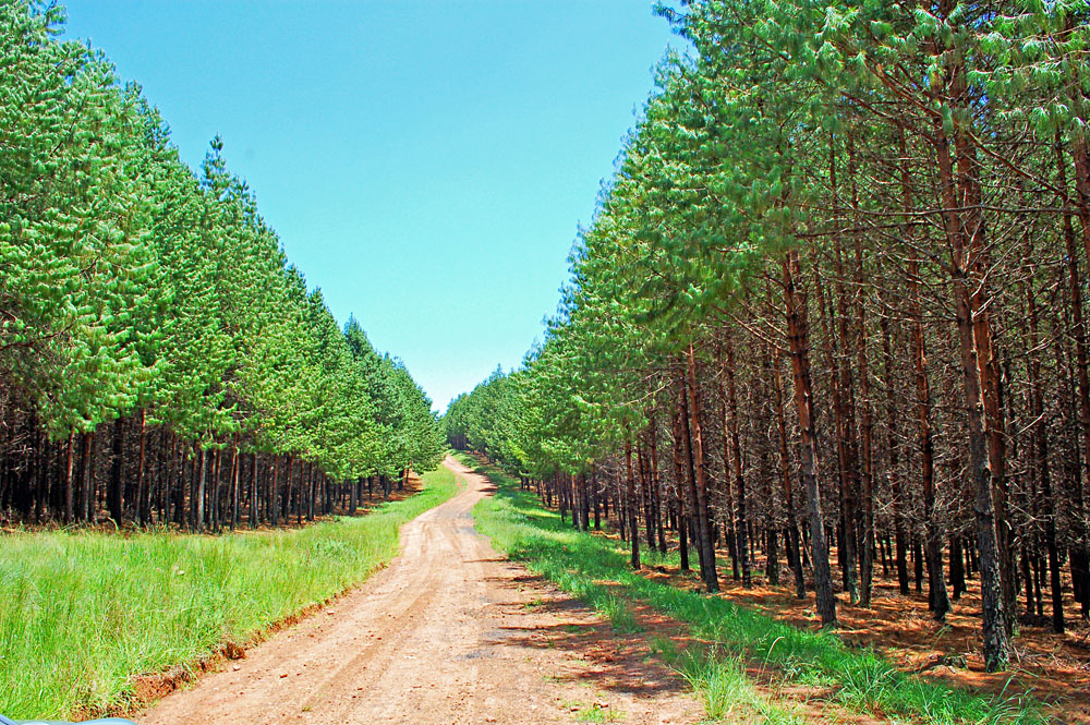 Forest Road in Mount Sheba, Mpumalanga, South Africa