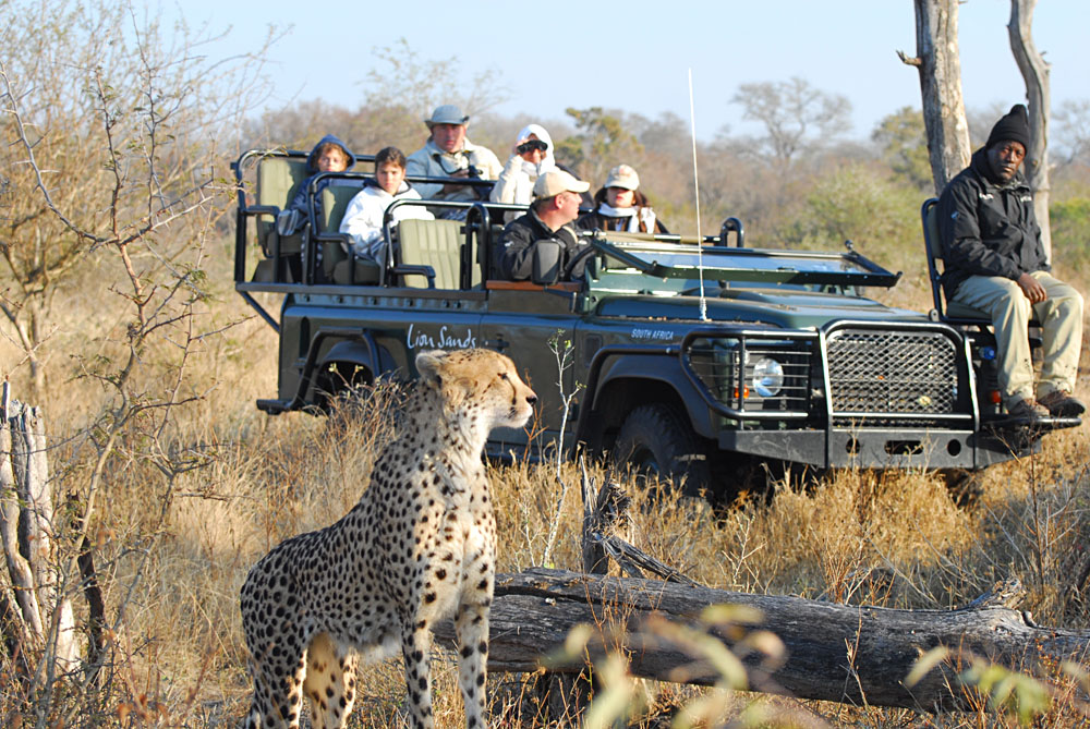 Game Viewing in Open Vehicles in the Sabi Sands, Kruger National Park, South Africa