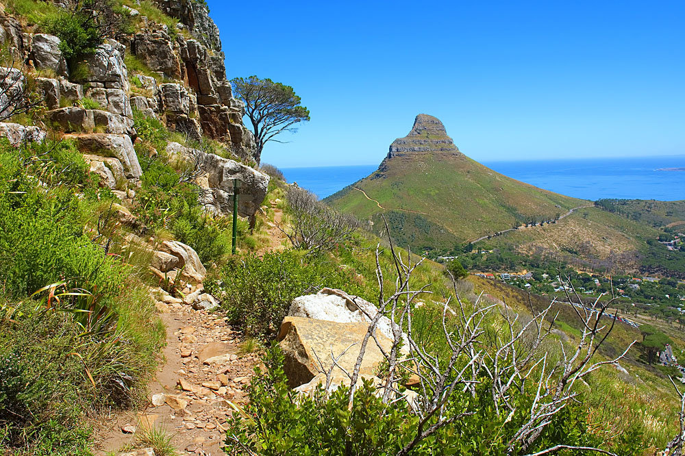 Hiking Trail and View of Lion's Head at Table Mountain, Cape Town, South Africa