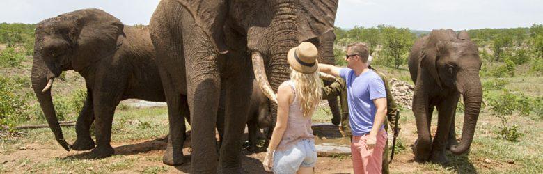 Wild Horizons Elephant Camp, Zimbabwe